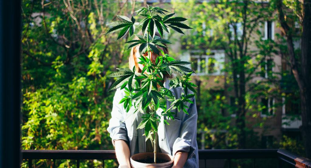 oklahoma grow laws