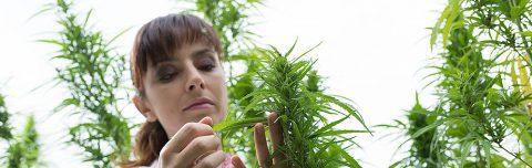A Brief History of Marijuana's (Not-So-Brief) Use in Medicine