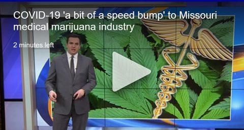 Missouri Medical Marijuana Doctors: Will COVID-19 Delay Industry Launch?