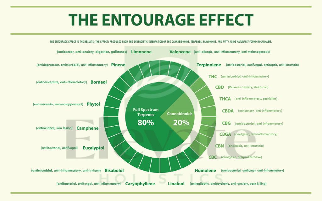 What is the Entourage Effect of Marijuana?