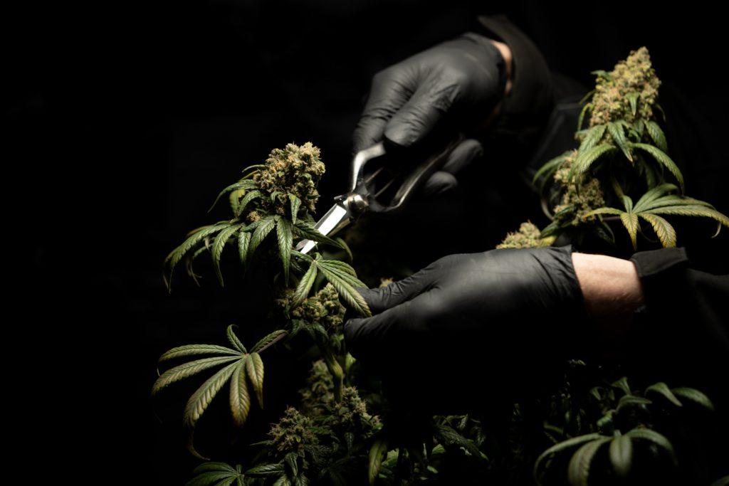 medical-marijuana-epilepsy